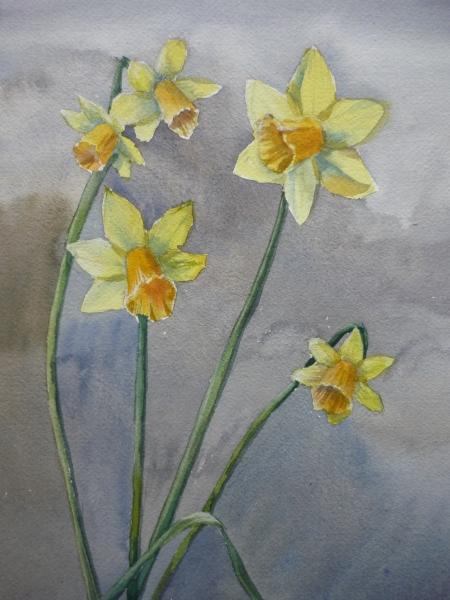 Daffodils I (watercolour)