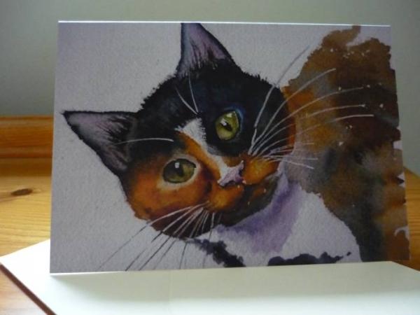 card - tortoiseshell cat
