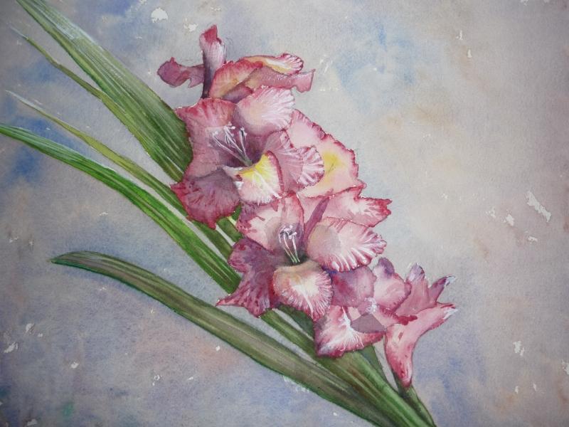 Pink & White Gladioli