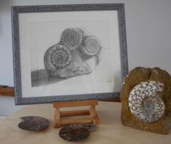 ammonites-framed-2