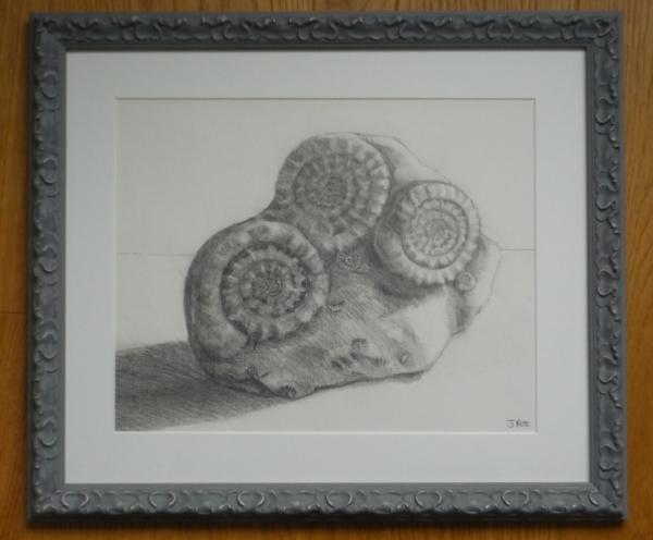 ammonites-framed1