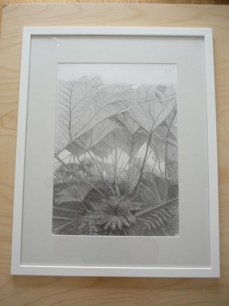 gunnera pencil framed
