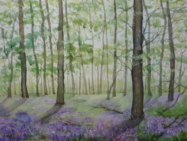Bluebell Wood, Sizergh