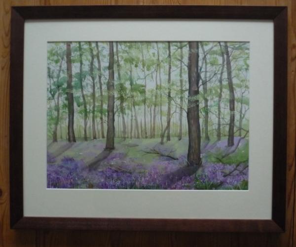 bluebell wood, sizergh IV framed