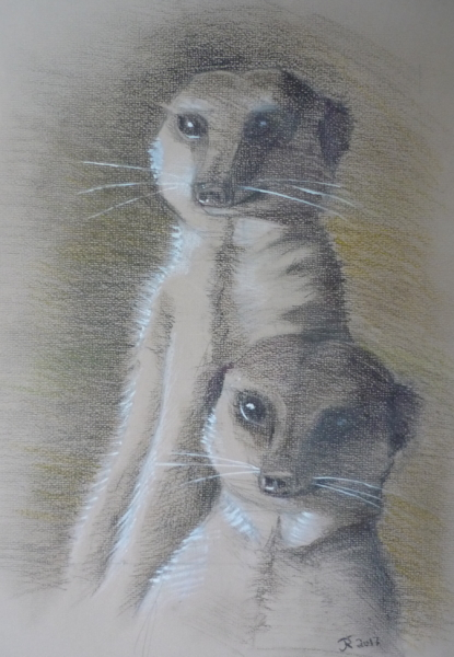 Meerkats drawing